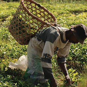 Ökologie in Madagaskar