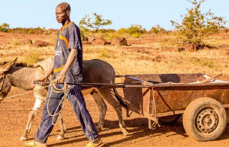 Eselskarren transportieren die Erde zu den Waschplätzen