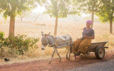 ein Esel transportiert eine burkinische Frau