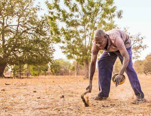 Yacouba Sawadogo: Der frühe Vogel