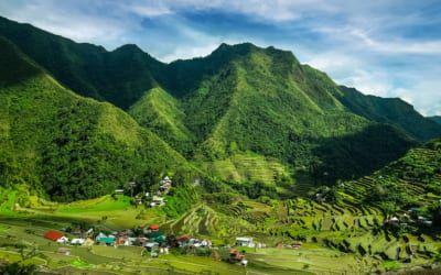 Reisfeld in den Philippinen