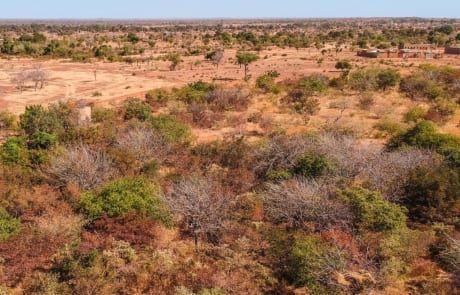 Yacoubas Grundstück mit Bäumen