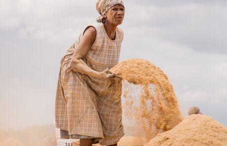 Für ein bisschen Reis müssen die Frauen hart arbeiten.