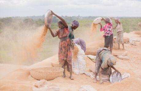 Frauen sieben Reis
