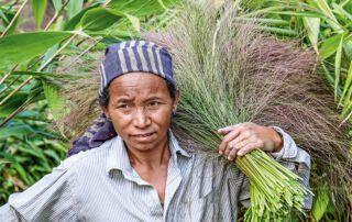 Feldarbeit gehört zum Alltag vieler Familien im Nordosten von Indien.