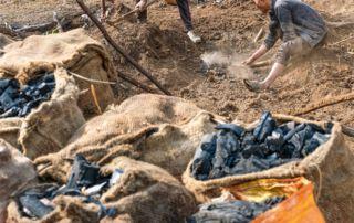 Männer gewinnen aus abgeholzten Bäumen Kohle, die sie später verkaufen.