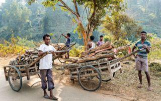 Begehrter Rohstoff: Das tropische Holz lässt sich gut verkaufen.