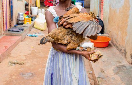 Sind die Küken groß, will Priscilla sie verkaufen, um ihr erstes eigenes Geld zu verdienen
