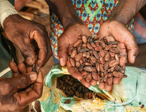 Côte d'Ivoire: Bittersüße Schokolade