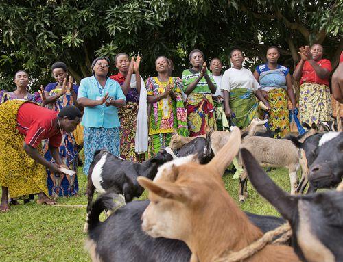 Nkombo: Wie der Phönix aus der Asche